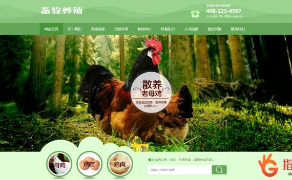 家禽畜牧养殖类网站织梦模板_农业家畜养殖农场织梦源码